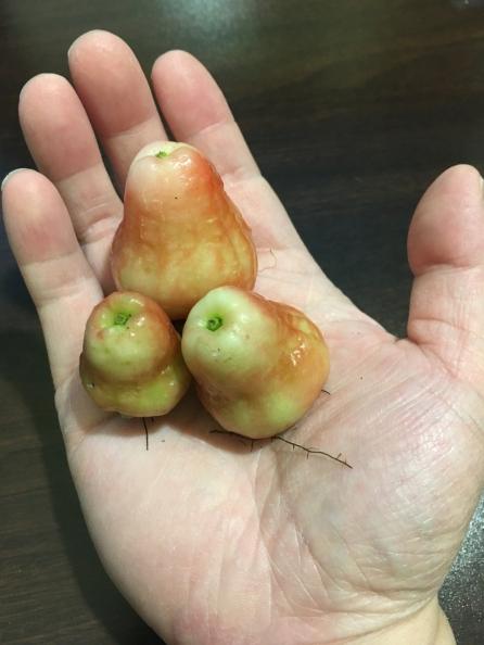 Elsa Fruit