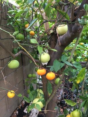 Three Fruits 1