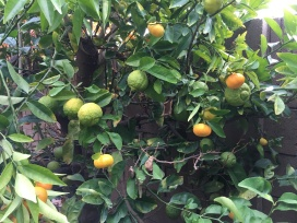 Three Fruits 2