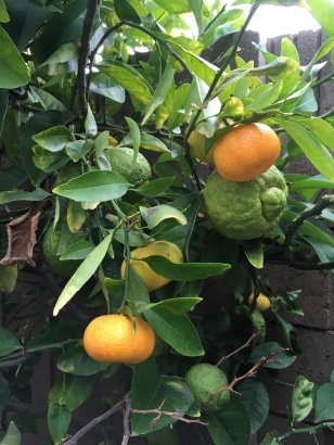 Three Fruits 3